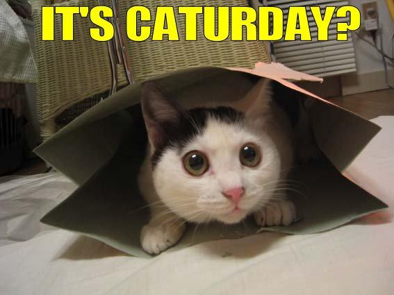 http://www.tukaro.com/images/cat-urday.jpg